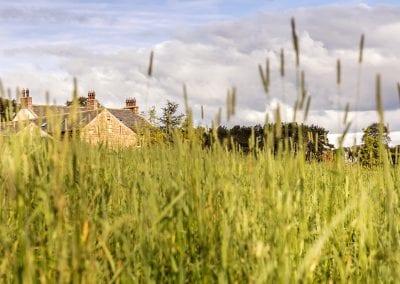 Rural Surroundings
